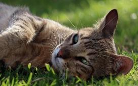 gato cesped