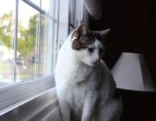 gato ventana