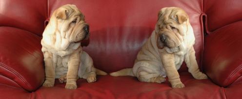 perro en sofá2