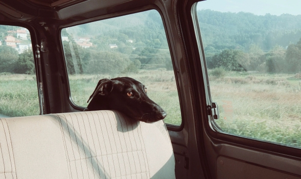 perro triste en coche2