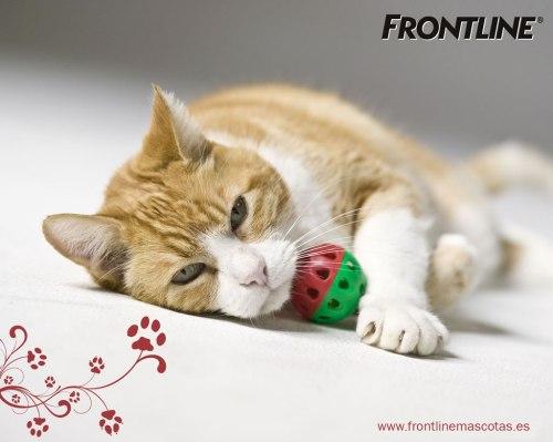 gato frontline