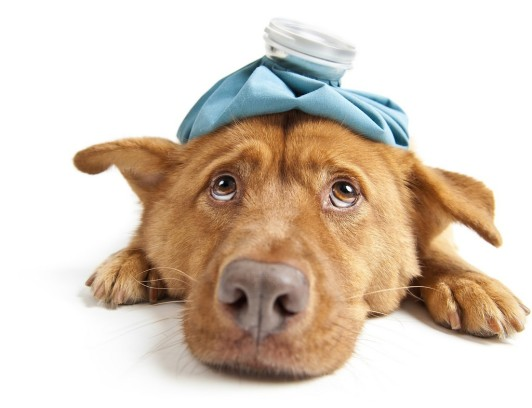 perro enfermo bolsa