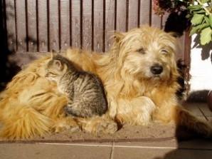 perros-y-gatos_2282127